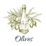 Olives and olive oil bottle vector sketch Stock Image