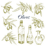 Olives, olive oil bottles pitchers vector sketch Royalty Free Stock Photos