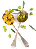 Olives, olive oil and twig of olive tree Stock Photography