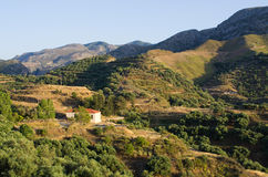 Olives plantation in the mountains of Crete, Greece Stock Image