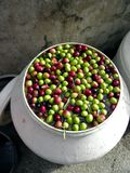Olives in the pot Royalty Free Stock Image
