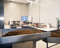 Olives in a processing machine Royalty Free Stock Photography