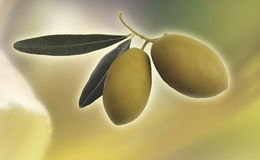 Olives. Retouched photo of a pair of olives Royalty Free Stock Photography