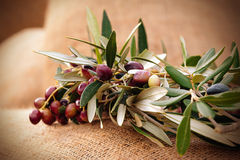 Olives on a sack Stock Images