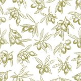 Olives branches on olive vector seamless pattern. Olives seamless pattern of vector sketch olive branches and fruits. Tracery of green olives harvest for Italian Royalty Free Stock Photos