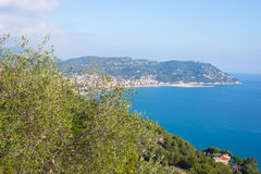 Olives tree branches on Italian coastline, Liguria Stock Image