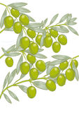 Olives on tree. The olives and branches of an olive tree Stock Photography