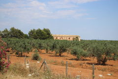 Olives tree and farm. Farm house in the middle of olive trees in Majorca, Spain stock photo
