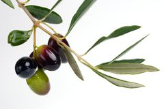 Olives twig Royalty Free Stock Photos