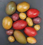 Olives Varieties Stock Images
