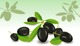 Olives, a vector. Olives with leaves on a white background, a vector Stock Image