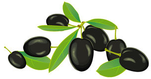 Olives, vector. Olives with leaves on a white background, vector Royalty Free Stock Image