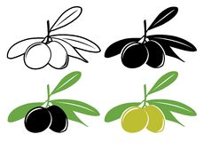 Olives. Vector olives in color and black and white Stock Images