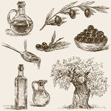 Olives. Vector drawings of a theme of the olives and olive oil Royalty Free Stock Images
