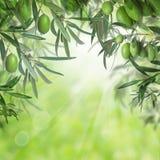 Olives vertes et feuilles d'olivier photographie stock libre de droits