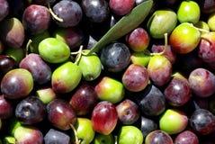 Olives vertes et rouges Images libres de droits