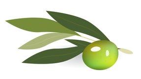 Olives vertes sur le branchement avec des lames illustration stock