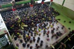 Olives in washing machine royalty free stock image