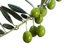 Olives on White Stock Photography