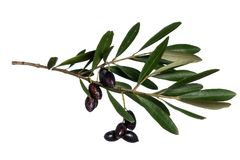 Olives on a white background Royalty Free Stock Photography