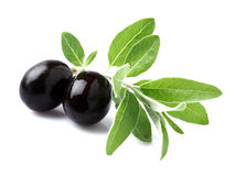 Olives With Leaves Royalty Free Stock Photography