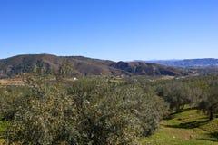 Oliveti e montagne della Spagna del sud Immagine Stock