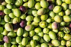 olivgrön Fotografering för Bildbyråer