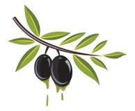 olivgrön Arkivbilder