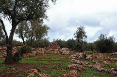 Olivgrön dunge i kartbokberg royaltyfri foto