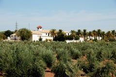 Olivgrön dunge och lantbrukarhem, Montilla arkivfoto