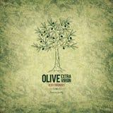 Olivgrön etikettdesign Fotografering för Bildbyråer