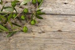 Olivgrön filial på trätabellen Arkivfoto