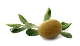 Olivgrön med gröna leaves royaltyfria foton
