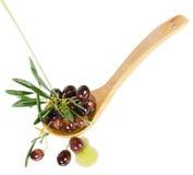 Olivgrön och loive olja Arkivfoton