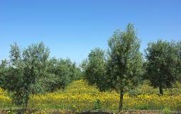 olivgrön tree Arkivbilder