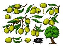 Olivgrön uppsättning Räcka den utdragna vektorillustrationen av filialen med grön mat, trädet, oljadroppe royaltyfri illustrationer