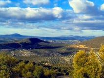 Olivgröna dungar, Granada landskap, Andalusia, Spanien royaltyfri fotografi