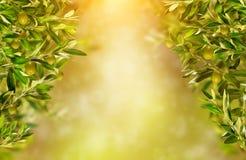 Olivgröna filialer med fritt utrymme för text hög bildupplösning för illustration 3d Arkivfoto