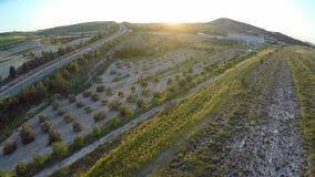 Olivgröna kolonier i Cypern landsbygd, aktiv trafik på huvudvägen, solnedgång lager videofilmer