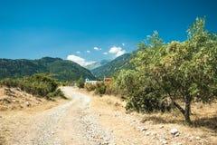 Olivgröna trees på den Grekland landssidan Royaltyfri Bild