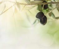 Olivgröndesignbakgrund Arkivbilder