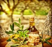 Olivgrönstilleben Fotografering för Bildbyråer