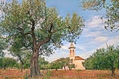 Olivgrönt spår i Abruzzo, Italien Fotografering för Bildbyråer