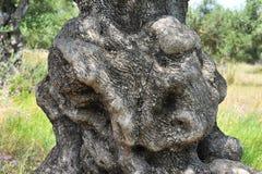 Olivgrönt trä Arkivbild