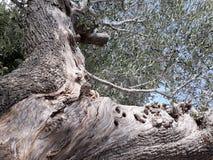 Olivgrüne Anlage Stockfoto