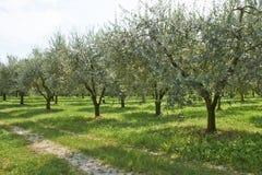 Olivgrüne Anlagen Lizenzfreie Stockbilder