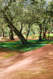 Olivgrüne Ernte Stockfoto