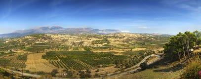 Olivgrüne Felder Stockbild