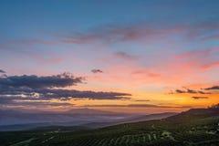 Olivgrüne Felder bei Sonnenaufgang lizenzfreie stockfotos