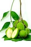 Olivgrüne Früchte. Lizenzfreie Stockfotografie